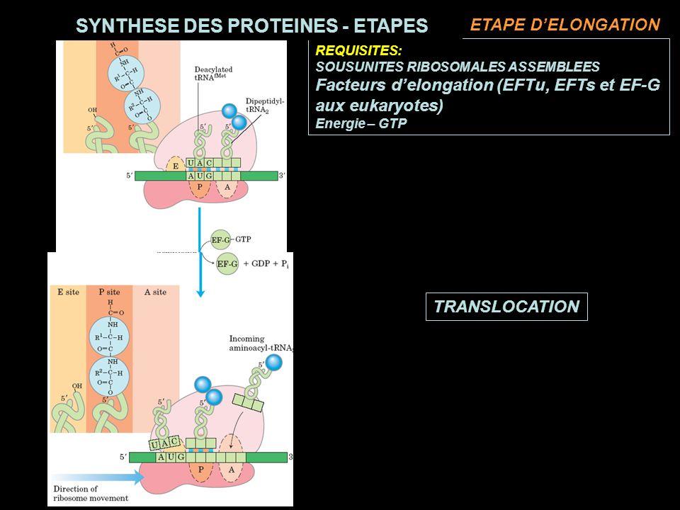 TRANSLOCATION REQUISITES: SOUSUNITES RIBOSOMALES ASSEMBLEES Facteurs delongation (EFTu, EFTs et EF-G aux eukaryotes) Energie – GTP SYNTHESE DES PROTEINES - ETAPES ETAPE DELONGATION