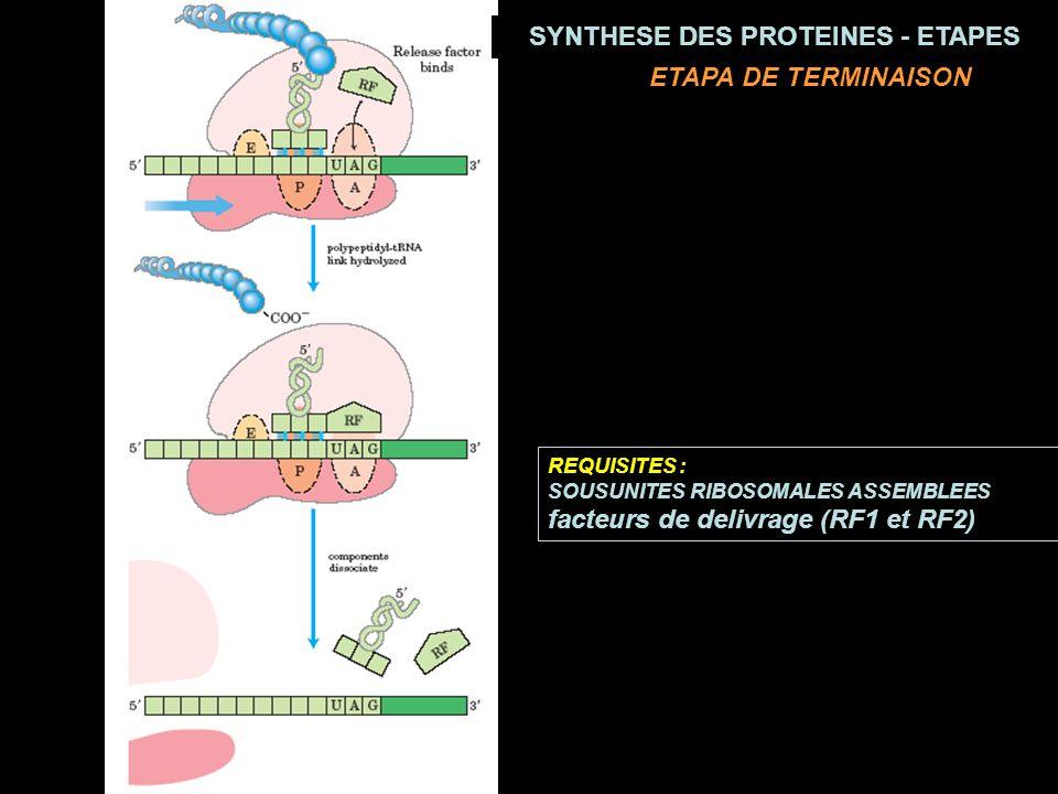 REQUISITES : SOUSUNITES RIBOSOMALES ASSEMBLEES facteurs de delivrage (RF1 et RF2) ETAPA DE TERMINAISON SYNTHESE DES PROTEINES - ETAPES