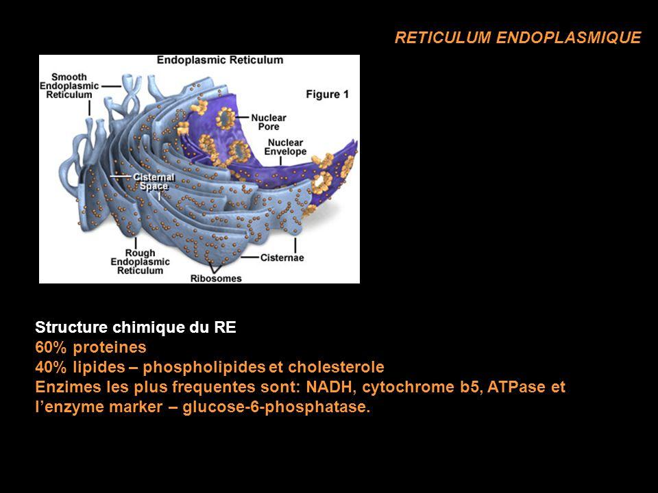 RETICULUM ENDOPLASMIQUE Structure chimique du RE 60% proteines 40% lipides – phospholipides et cholesterole Enzimes les plus frequentes sont: NADH, cytochrome b5, ATPase et lenzyme marker – glucose-6-phosphatase.