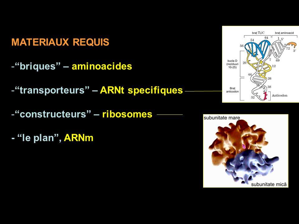 MATERIAUX REQUIS -briques – aminoacides -transporteurs – ARNt specifiques -constructeurs – ribosomes - le plan, ARNm