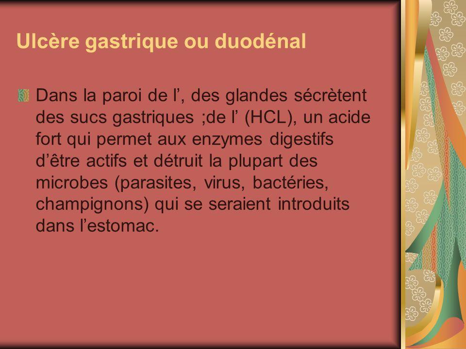 Ulcère gastrique ou duodénal Dans la paroi de l, des glandes sécrètent des sucs gastriques ;de l (HCL), un acide fort qui permet aux enzymes digestifs