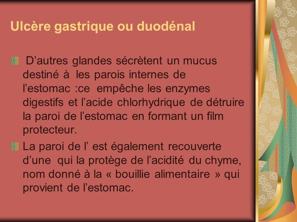 Ulcère gastrique ou duodénal Dautres glandes sécrètent un mucus destiné à les parois internes de lestomac :ce empêche les enzymes digestifs et lacide