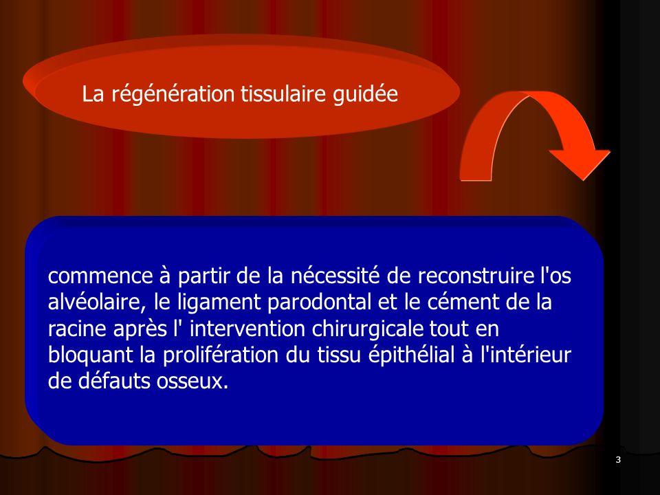 3 La régénération tissulaire guidée commence à partir de la nécessité de reconstruire l'os alvéolaire, le ligament parodontal et le cément de la racin