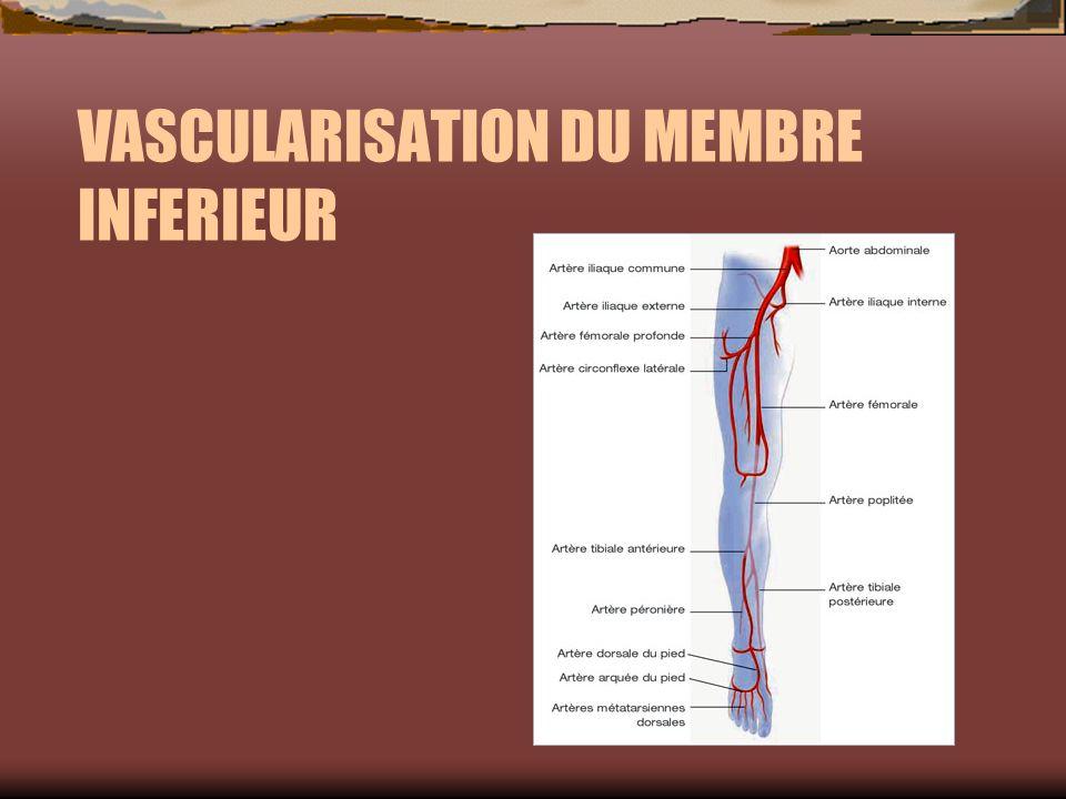 VASCULARISATION DU MEMBRE INFERIEUR