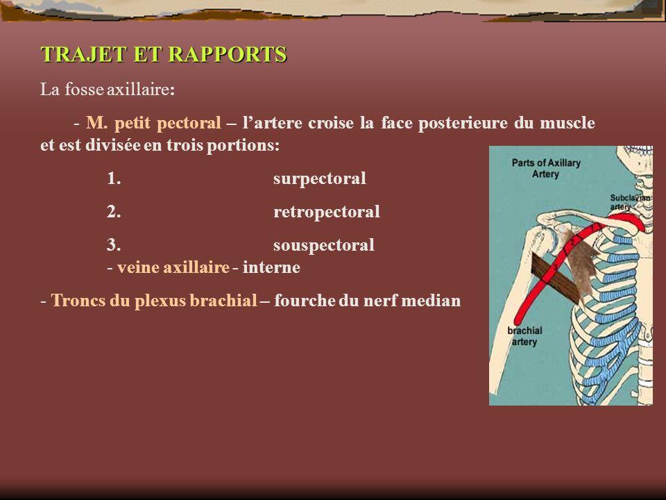 TRAJET ET RAPPORTS La fosse axillaire: - M. petit pectoral – lartere croise la face posterieure du muscle et est divisée en trois portions: 1.surpecto