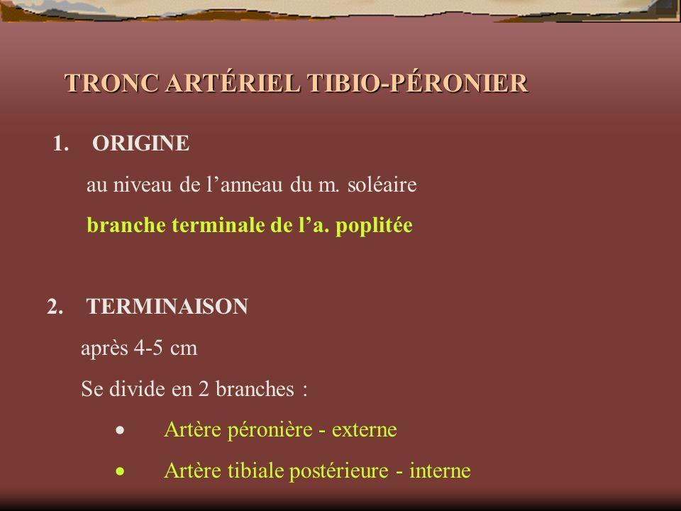 TRONC ARTÉRIEL TIBIO-PÉRONIER 1. ORIGINE au niveau de lanneau du m. soléaire branche terminale de la. poplitée 2. TERMINAISON après 4-5 cm Se divide e