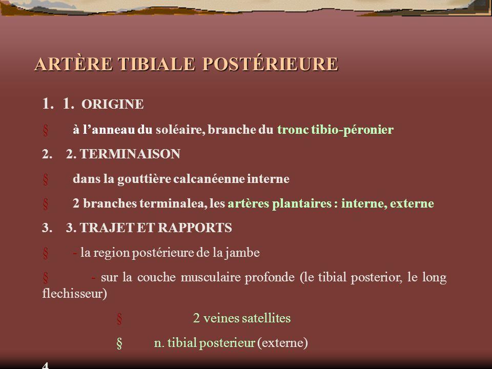 ARTÈRE TIBIALE POSTÉRIEURE 1. 1. ORIGINE à lanneau du soléaire, branche du tronc tibio-péronier 2. 2. TERMINAISON dans la gouttière calcanéenne intern