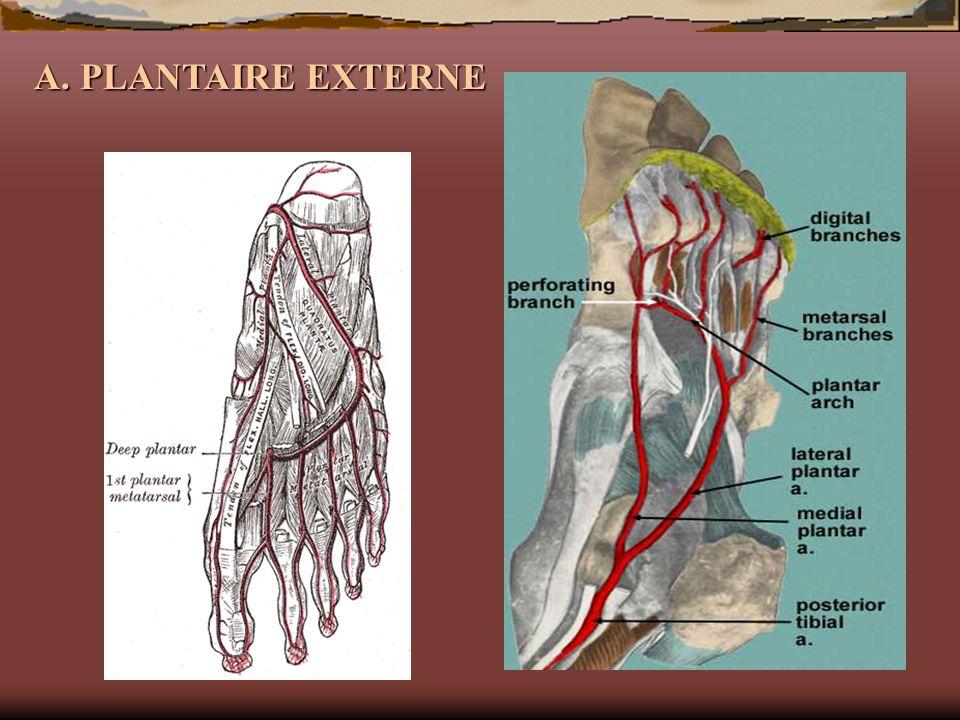 A. PLANTAIRE EXTERNE