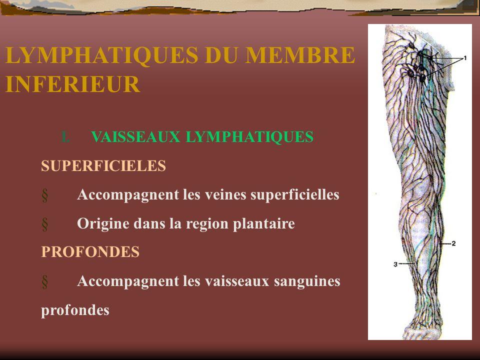 LYMPHATIQUES DU MEMBRE INFERIEUR I. VAISSEAUX LYMPHATIQUES SUPERFICIELES Accompagnent les veines superficielles Origine dans la region plantaire PROFO