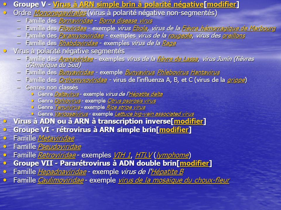 Groupe V - Virus à ARN simple brin à polarité négative[modifier] Groupe V - Virus à ARN simple brin à polarité négative[modifier]Virus à ARN simple brin à polarité négativemodifierVirus à ARN simple brin à polarité négativemodifier Ordre Mononegavirales (virus à polarité négative non-segmentés) Ordre Mononegavirales (virus à polarité négative non-segmentés)Mononegavirales –Famille des Bornaviridae - Borna disease virus BornaviridaeBorna disease virusBornaviridaeBorna disease virus –Famille des Filoviridae - exemple virus Ebola, virus de la Fièvre hémorragique de Marbourg FiloviridaeEbolaFièvre hémorragique de MarbourgFiloviridaeEbolaFièvre hémorragique de Marbourg –Famille des Paramyxoviridae - exemples virus de la rougeole, virus des oreillons ParamyxoviridaerougeoleoreillonsParamyxoviridaerougeoleoreillons –Famille des Rhabdoviridae - exemples virus de la Rage RhabdoviridaeRageRhabdoviridaeRage Virus à polarité négative segmentés Virus à polarité négative segmentés –Famille des Arenaviridae - exemples virus de la fièvre de Lassa, virus Junin (fièvres d Amérique du Sud) Arenaviridaefièvre de LassaArenaviridaefièvre de Lassa –Famille des Bunyaviridae - exemple Bunyavirus Phlebovirus Hantavirus BunyaviridaeBunyavirusPhlebovirusHantavirusBunyaviridaeBunyavirusPhlebovirusHantavirus –Famille des Orthomyxoviridae - virus de l influenza A, B, et C (virus de la grippe) OrthomyxoviridaegrippeOrthomyxoviridaegrippe –Genres non classés Genre Deltavirus - exemple virus de l Hépatite delta Genre Deltavirus - exemple virus de l Hépatite deltaDeltavirusHépatite deltaDeltavirusHépatite delta Genre Ophiovirus - exemple Citrus psorosis virus Genre Ophiovirus - exemple Citrus psorosis virusOphiovirusCitrus psorosis virusOphiovirusCitrus psorosis virus Genre Tenuivirus - exemple Rice stripe virus Genre Tenuivirus - exemple Rice stripe virusTenuivirusRice stripe virusTenuivirusRice stripe virus Genre Varicosaivirus - exemple Lettuce big-vein associated virus Genre Varicosaivirus - exem