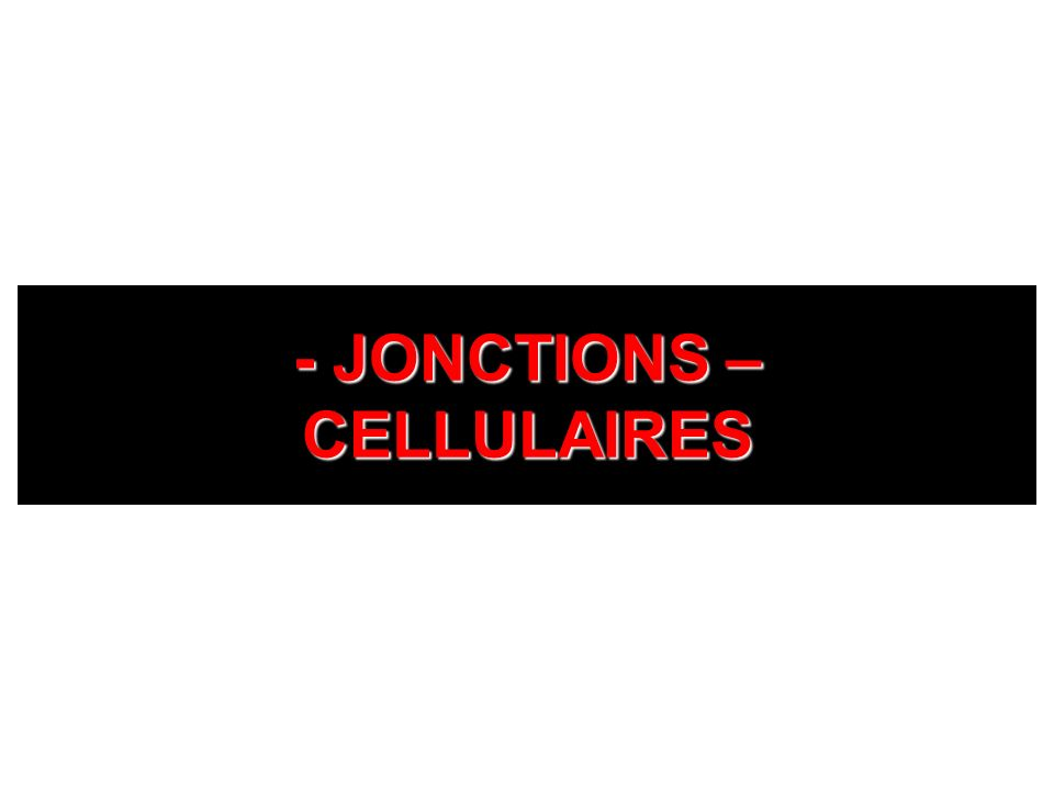 - JONCTIONS – CELLULAIRES