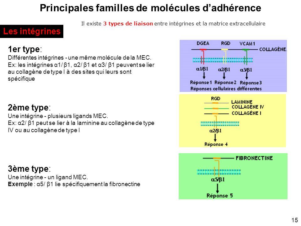 15 Principales familles de molécules dadhérence Il existe 3 types de liaison entre intégrines et la matrice extracellulaire Les intégrines 1er type: D