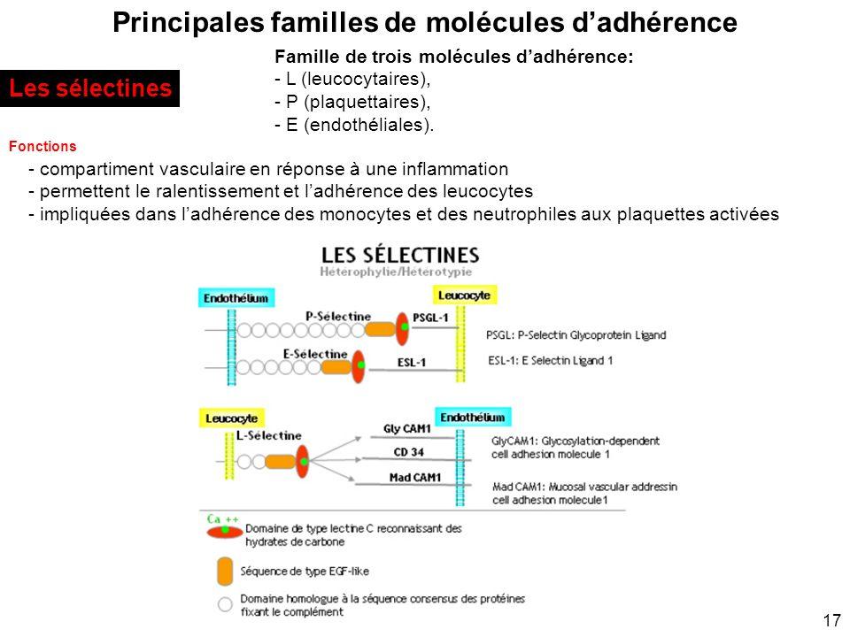 17 Principales familles de molécules dadhérence Les sélectines Famille de trois molécules dadhérence: - L (leucocytaires), - P (plaquettaires), - E (e