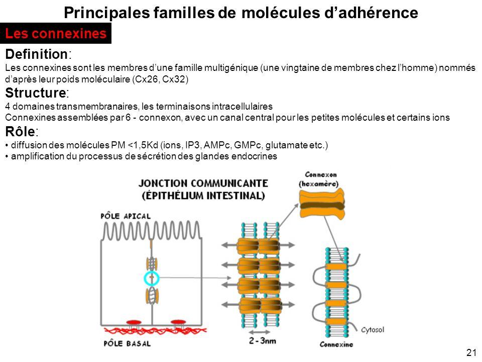 21 Principales familles de molécules dadhérence Les connexines Definition: Les connexines sont les membres dune famille multigénique (une vingtaine de