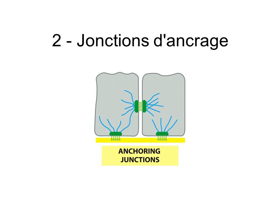 2 - Jonctions d'ancrage