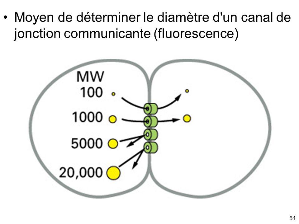 51 Moyen de déterminer le diamètre d'un canal de jonction communicante (fluorescence)
