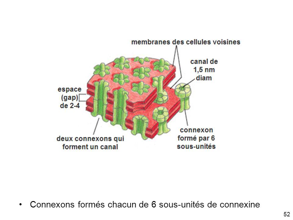 52 Connexons formés chacun de 6 sous-unités de connexine