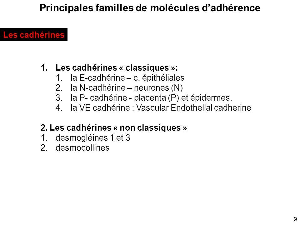 9 Principales familles de molécules dadhérence 1.Les cadhérines « classiques »: 1.la E-cadhérine – c. épithéliales 2.la N-cadhérine – neurones (N) 3.l