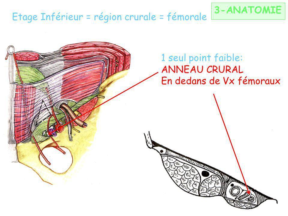 Limites: Dh: bandelette iliopectinée + psoas Ht: arcade crurale Bas: bandelette iliopubienne DD: ligament de Gimbernat Etage Inférieur = région crural
