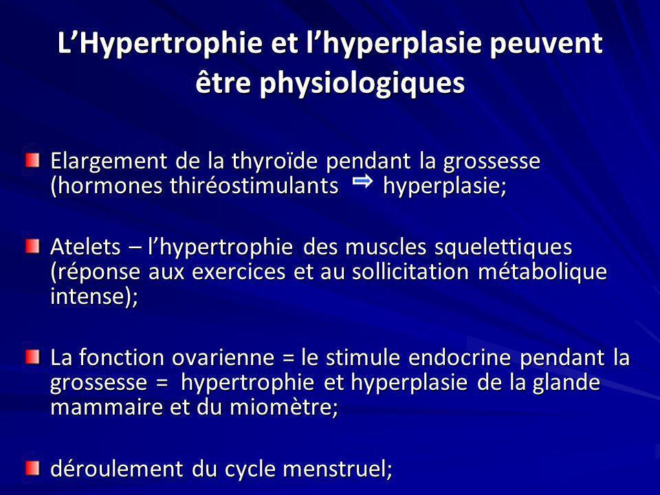 LHypertrophie et lhyperplasie peuvent être physiologiques Elargement de la thyroïde pendant la grossesse (hormones thiréostimulants hyperplasie; Atele