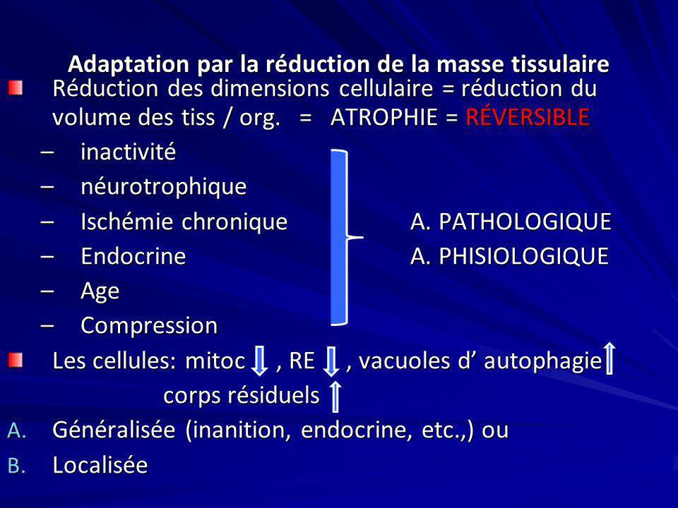 Adaptation par la réduction de la masse tissulaire Réduction des dimensions cellulaire = réduction du volume des tiss / org. = ATROPHIE = RÉVERSIBLE –