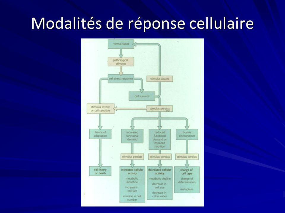 Modalités de réponse cellulaire
