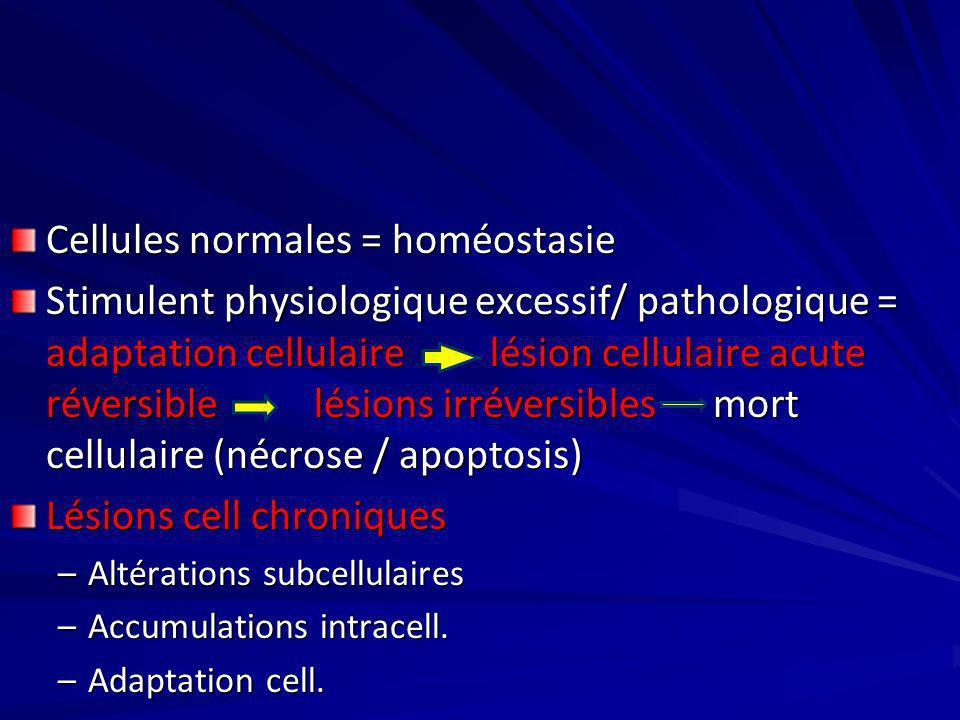 Cellules normales = homéostasie Stimulent physiologique excessif/ pathologique = adaptation cellulaire lésion cellulaire acute réversible lésions irré