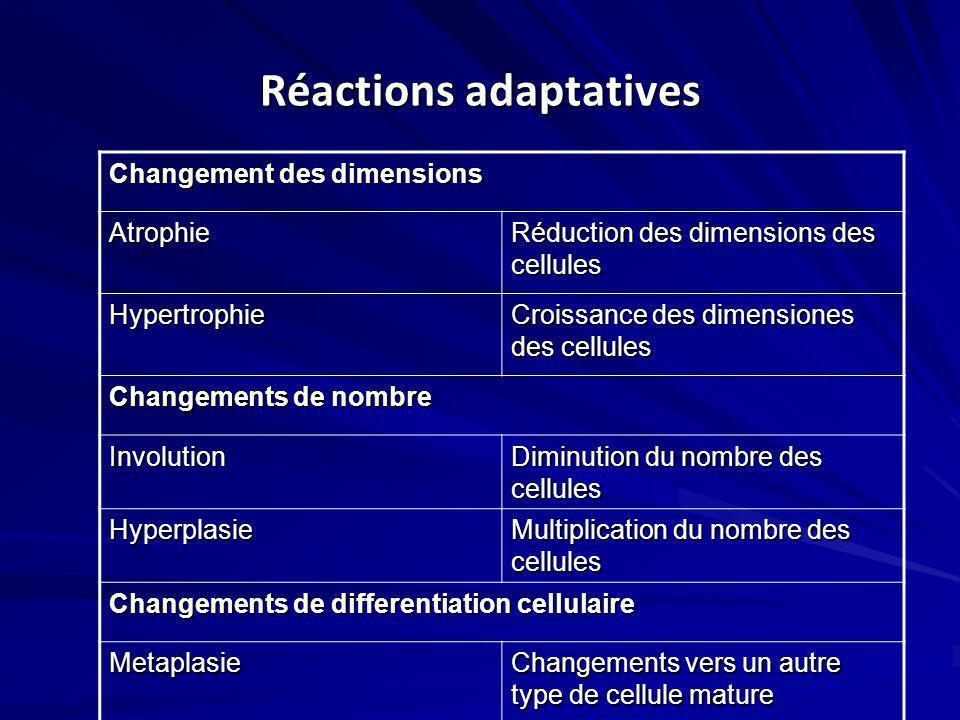Réactions adaptatives Changement des dimensions Atrophie Réduction des dimensions des cellules Hypertrophie Croissance des dimensiones des cellules Ch
