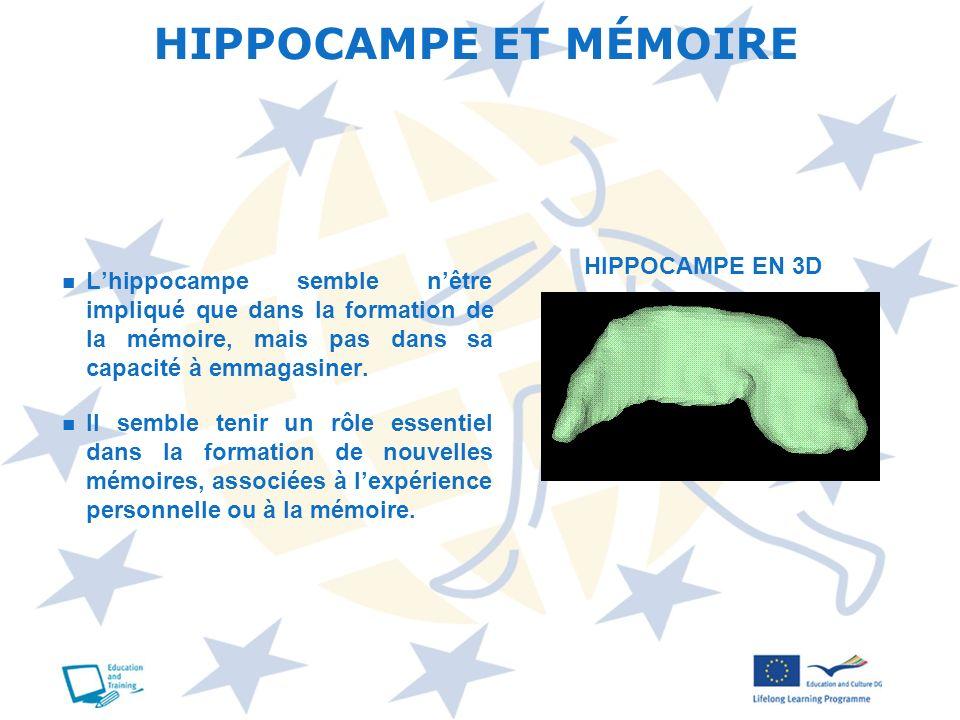 HIPPOCAMPE ET MÉMOIRE Lhippocampe semble nêtre impliqué que dans la formation de la mémoire, mais pas dans sa capacité à emmagasiner. Il semble tenir