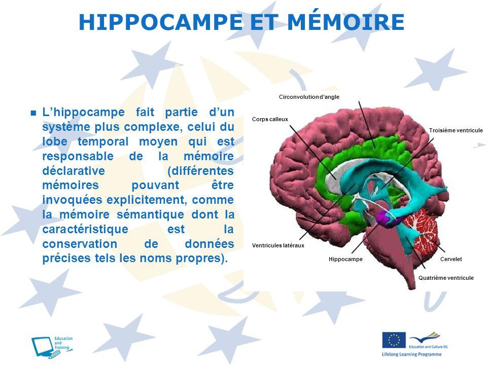 Lhippocampe fait partie dun système plus complexe, celui du lobe temporal moyen qui est responsable de la mémoire déclarative (différentes mémoires po