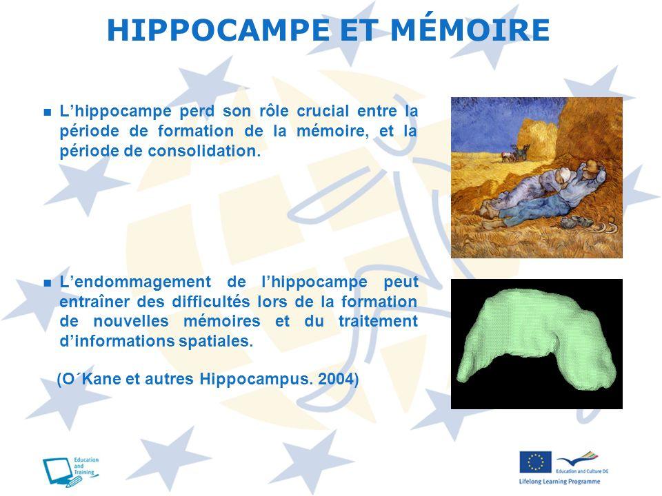 Lhippocampe perd son rôle crucial entre la période de formation de la mémoire, et la période de consolidation. Lendommagement de lhippocampe peut entr