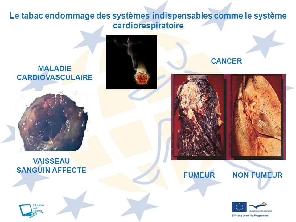 Le tabac endommage des systèmes indispensables comme le système cardiorespiratoire MALADIE CARDIOVASCULAIRE CANCER VAISSEAU SANGUIN AFFECTE FUMEURNON
