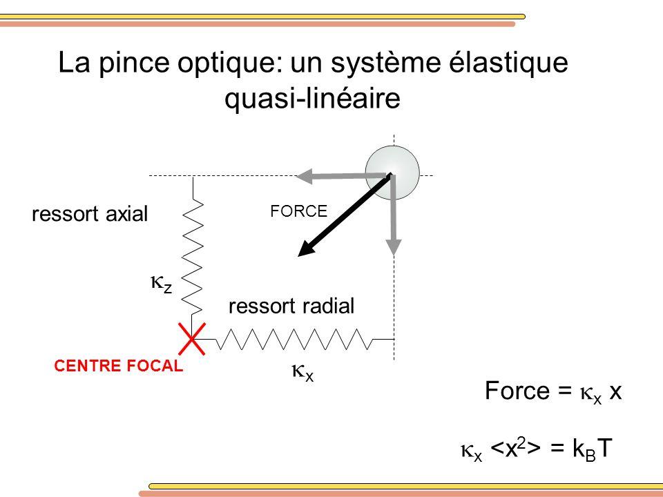 La pince optique: un système élastique quasi-linéaire CENTRE FOCAL x z FORCE Force = x x x = k B T ressort axial ressort radial