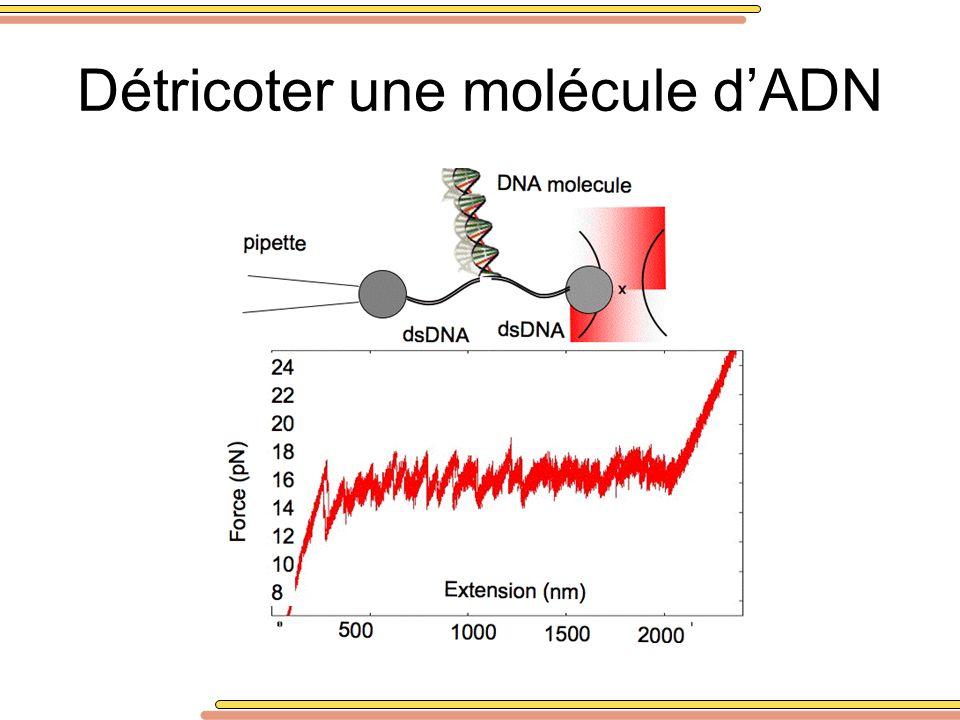 Détricoter une molécule dADN