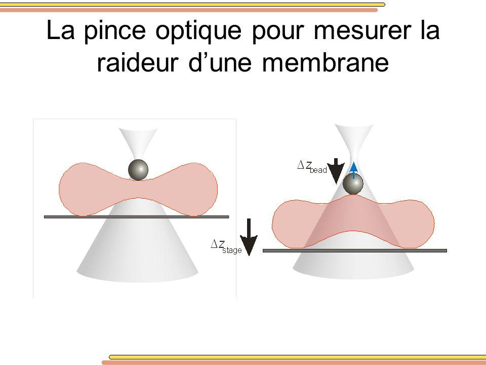 La pince optique pour mesurer la raideur dune membrane