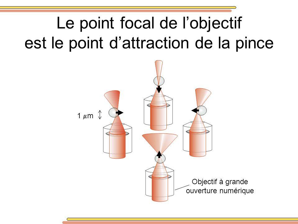 Le point focal de lobjectif est le point dattraction de la pince Objectif à grande ouverture numérique 1 m