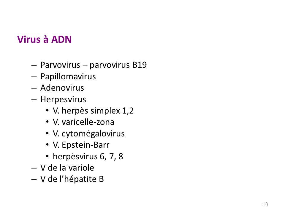 Virus à ADN – Parvovirus – parvovirus B19 – Papillomavirus – Adenovirus – Herpesvirus V. herpès simplex 1,2 V. varicelle-zona V. cytomégalovirus V. Ep