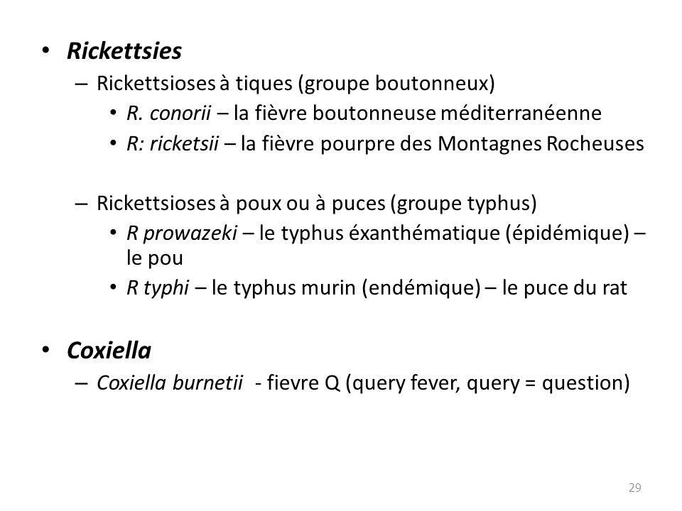 Rickettsies – Rickettsioses à tiques (groupe boutonneux) R. conorii – la fièvre boutonneuse méditerranéenne R: ricketsii – la fièvre pourpre des Monta