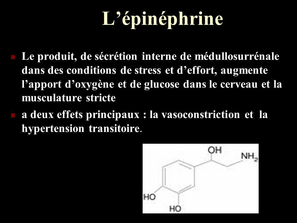 Lépinéphrine Le produit, de sécrétion interne de médullosurrénale dans des conditions de stress et deffort, augmente lapport doxygène et de glucose da