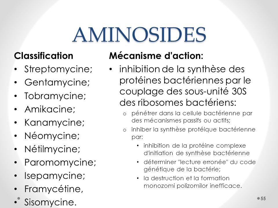 AMINOSIDES Mécanisme d'action: inhibition de la synthèse des protéines bactériennes par le couplage des sous-unité 30S des ribosomes bactériens: o pén