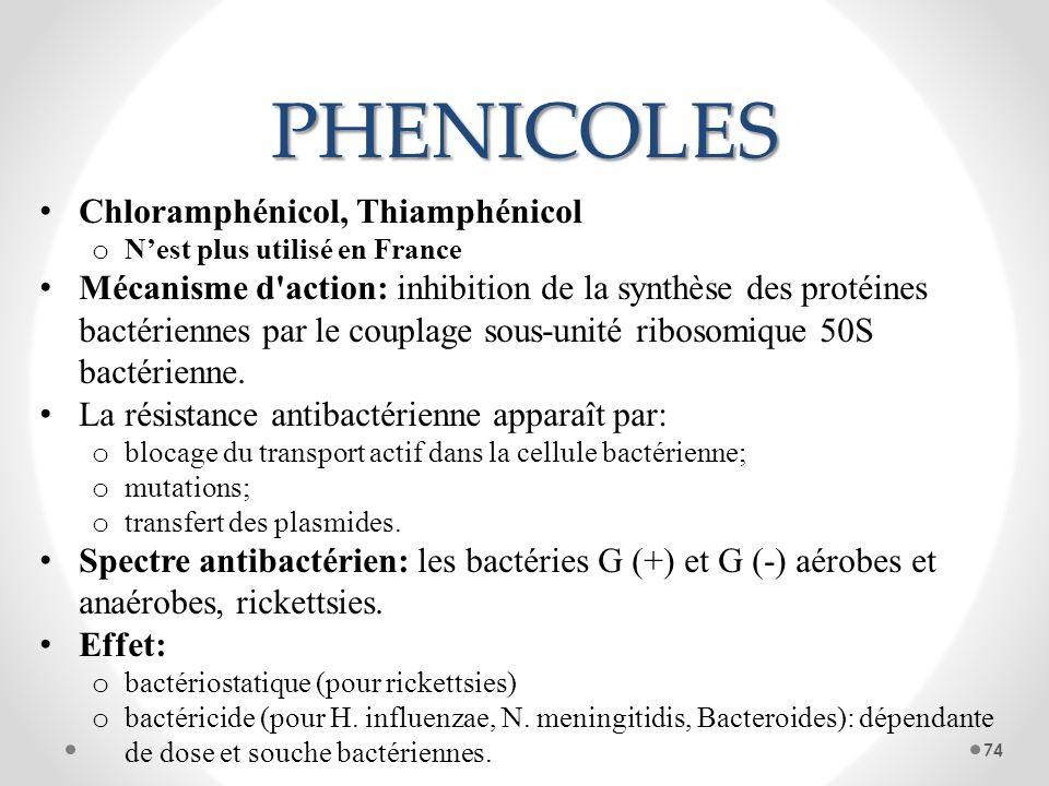 PHENICOLES Chloramphénicol, Thiamphénicol o Nest plus utilisé en France Mécanisme d'action: inhibition de la synthèse des protéines bactériennes par l