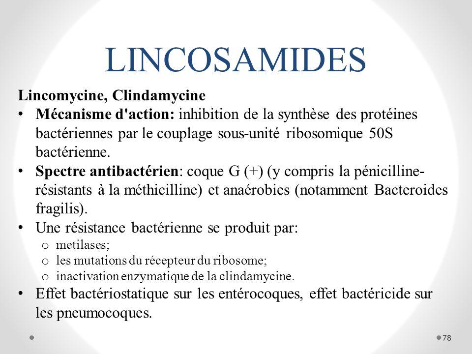 LINCOSAMIDES Lincomycine, Clindamycine Mécanisme d'action: inhibition de la synthèse des protéines bactériennes par le couplage sous-unité ribosomique