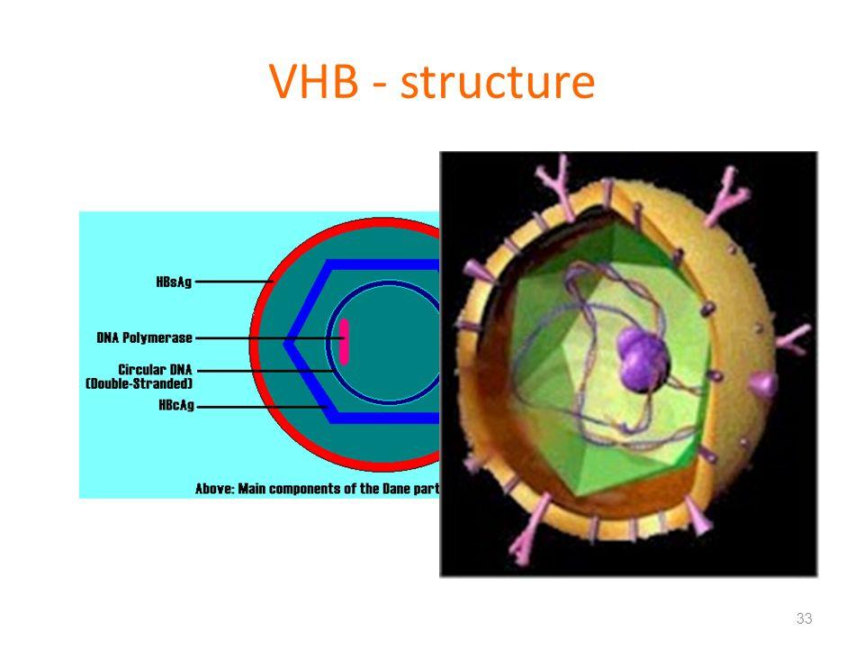 VHB - structure 33