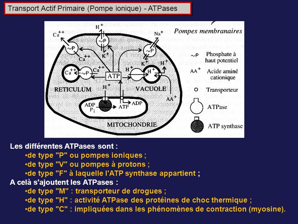 Transport Actif Primaire (Pompe ionique) - ATPases Les différentes ATPases sont : de type