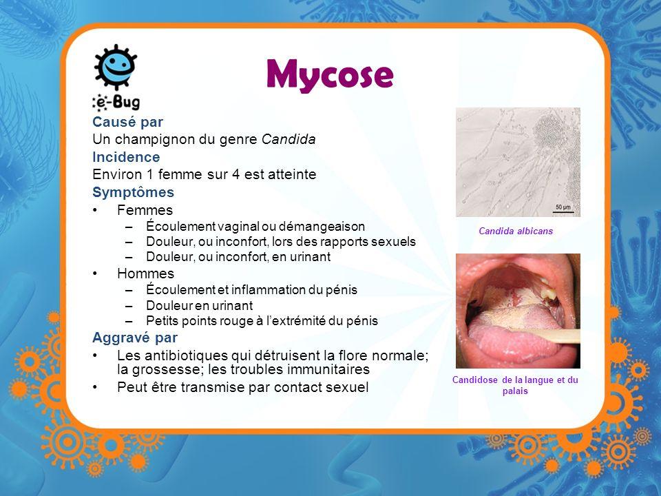 Mycose Causé par Un champignon du genre Candida Incidence Environ 1 femme sur 4 est atteinte Symptômes Femmes –Écoulement vaginal ou démangeaison –Dou