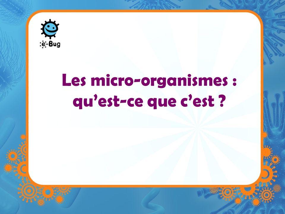 Les micro-organismes : quest-ce que cest ?