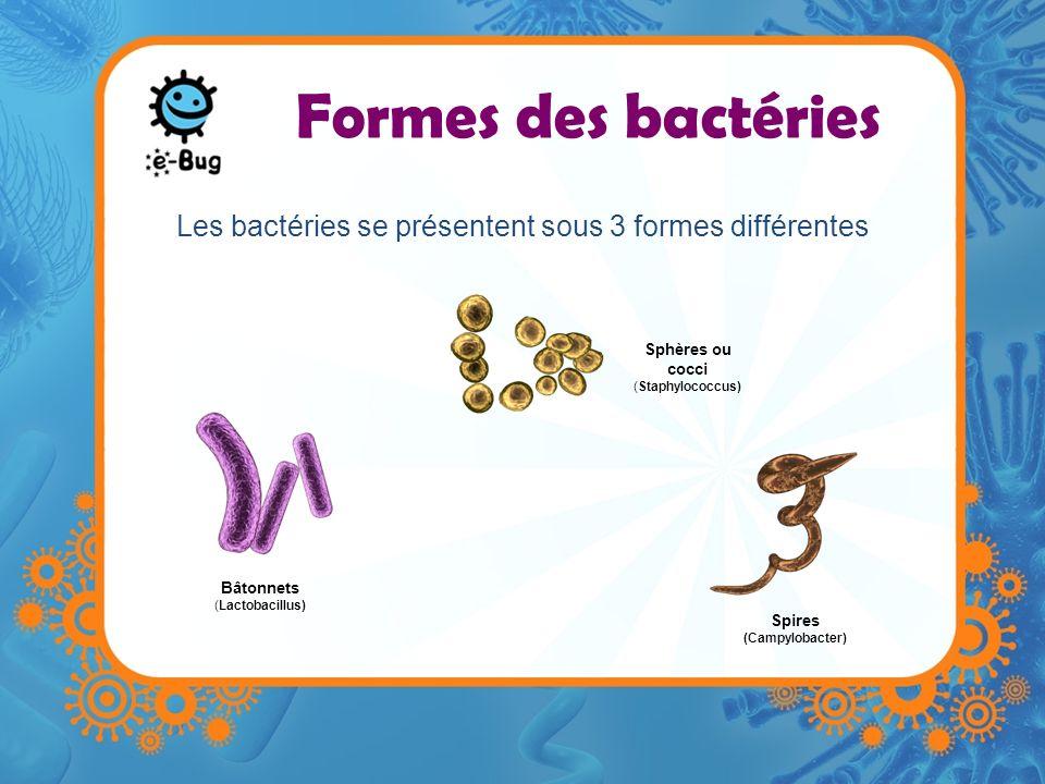 Formes des bactéries Les bactéries se présentent sous 3 formes différentes Spires (Campylobacter) Bâtonnets (Lactobacillus) Sphères ou cocci (Staphylo
