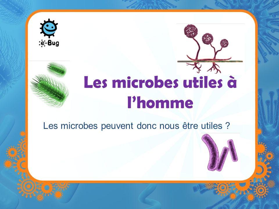 Les microbes utiles à lhomme Il existe des milliards de microbes et beaucoup dautres qui nont pas encore été découverts.