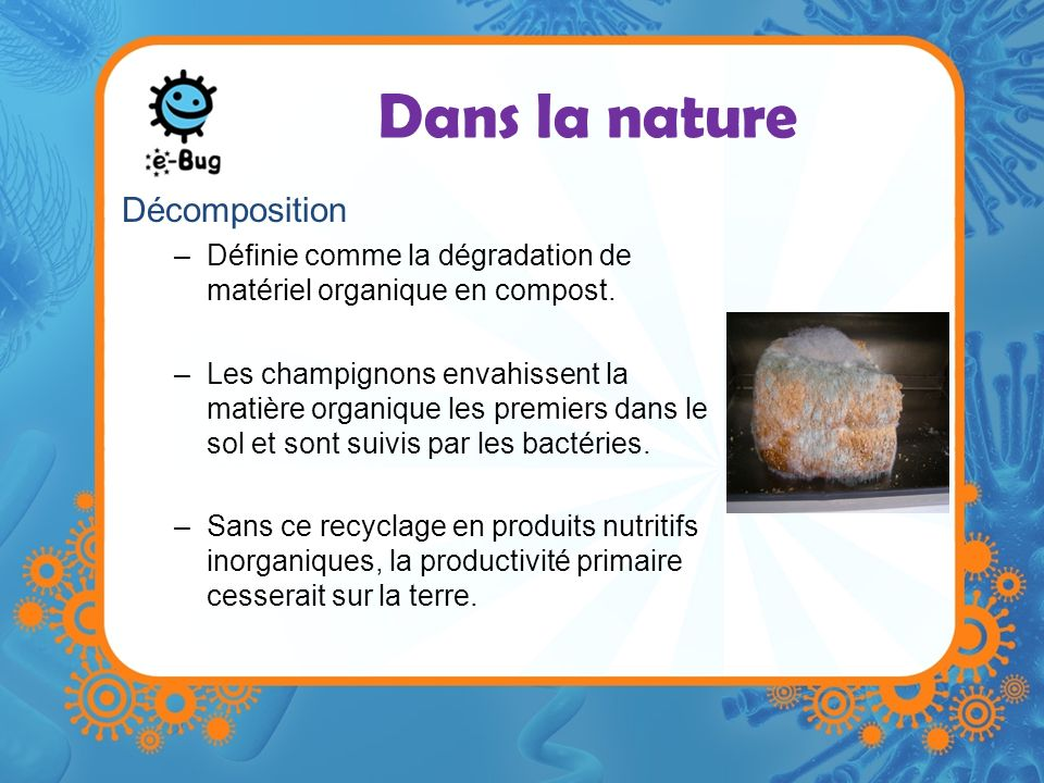 Dans la nature Décomposition –Définie comme la dégradation de matériel organique en compost. –Les champignons envahissent la matière organique les pre