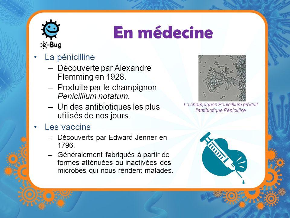 En médecine La pénicilline –Découverte par Alexandre Flemming en 1928. –Produite par le champignon Penicillium notatum. –Un des antibiotiques les plus